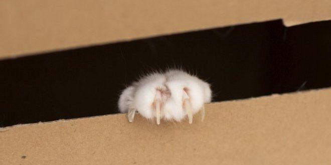 Физики нашли способ «спасти» кота Шредингера
