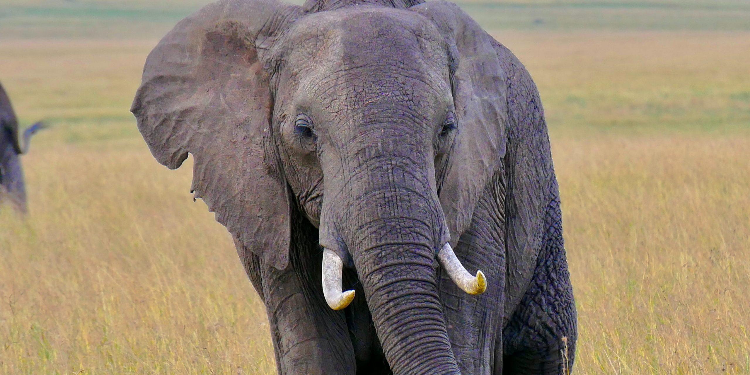 Ученые создали нейросеть для подсчета слонов