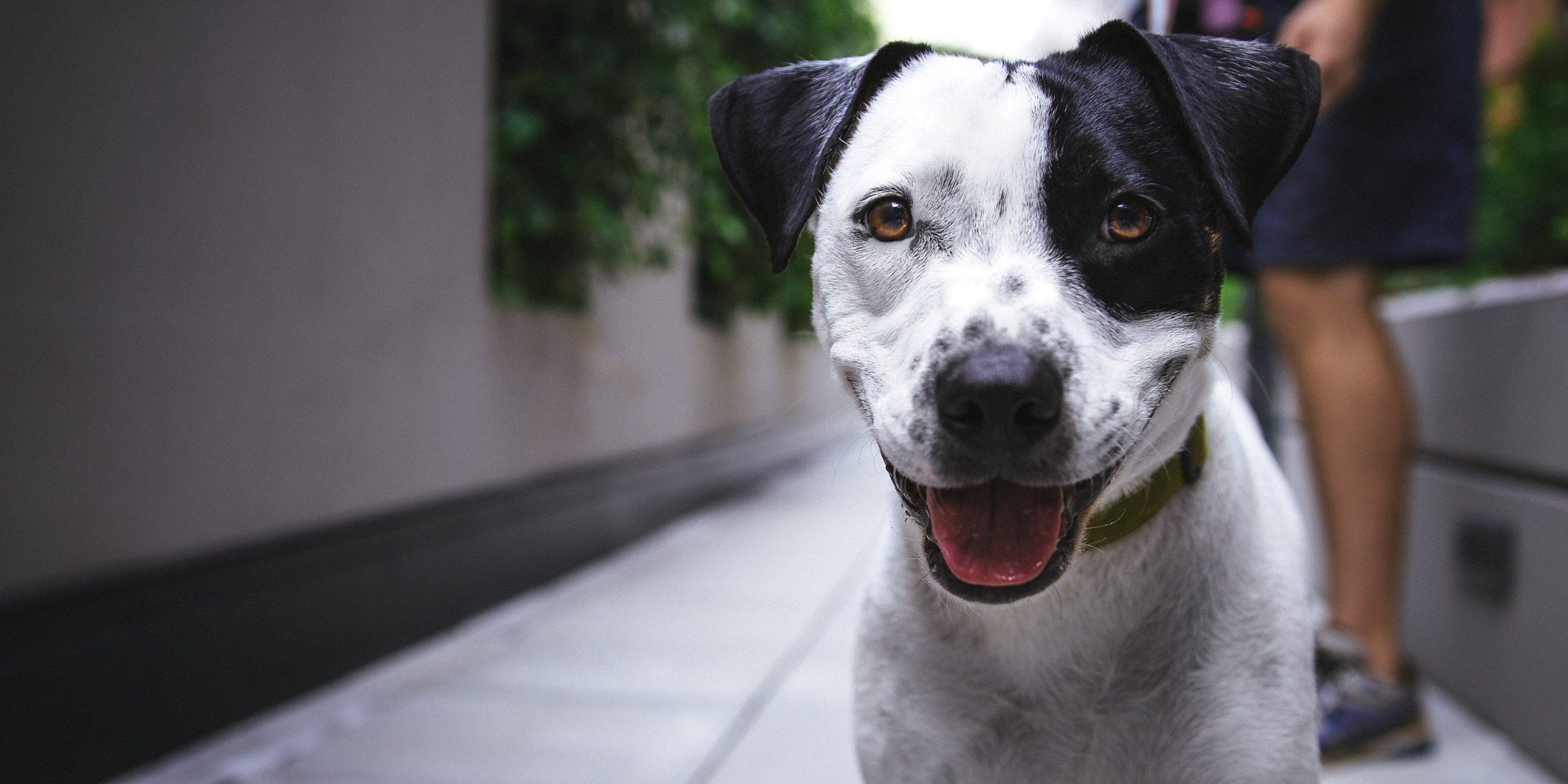 ИИ научился тренировать собак вместо человека