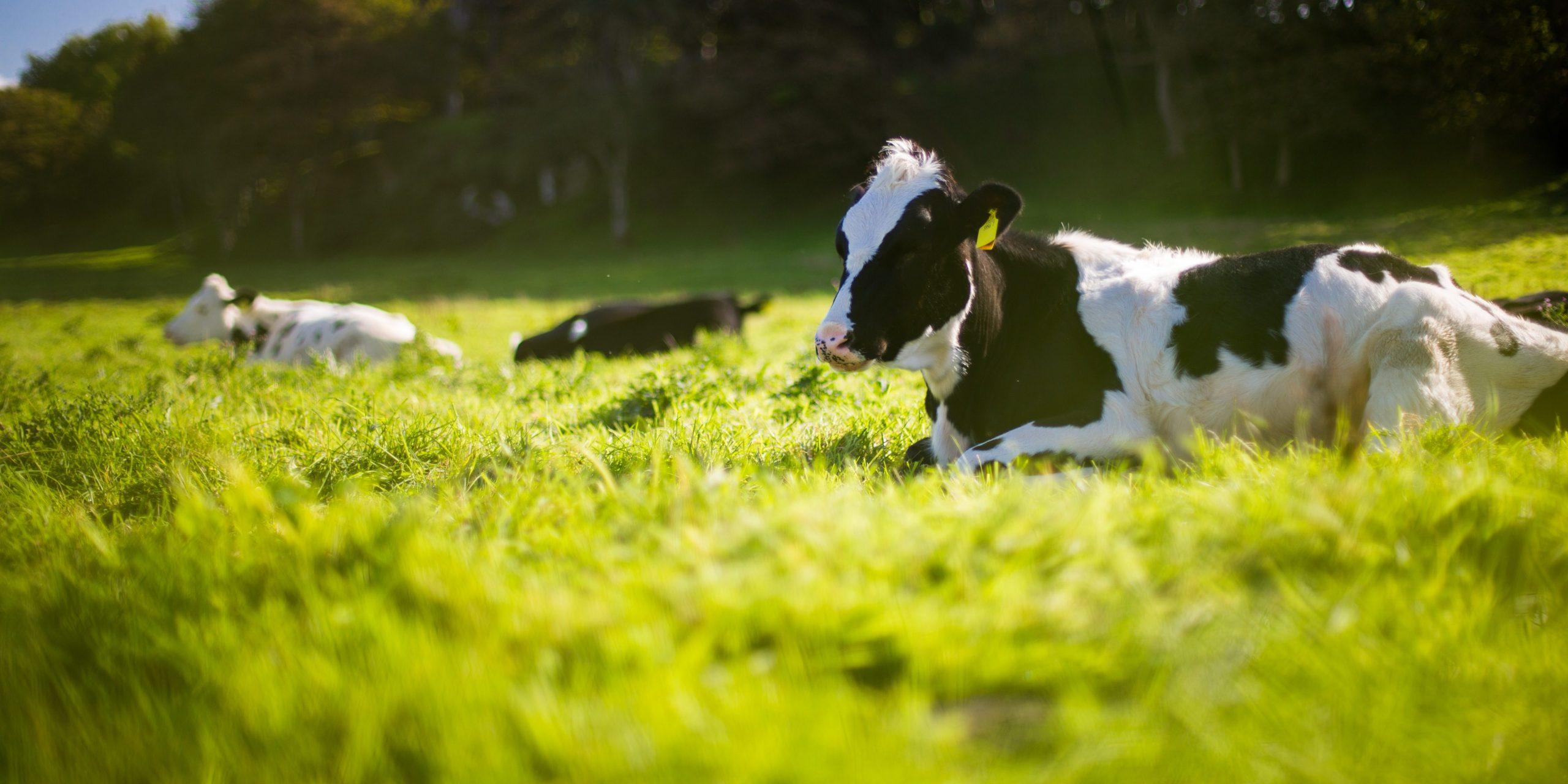 В России создали искусственный интеллект для повышения удоя коров