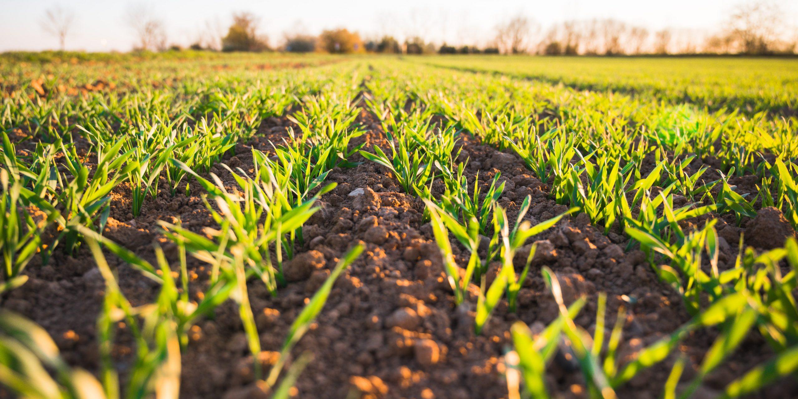 Комплексный подход к цифровизации сельского хозяйства представлен на международном форуме