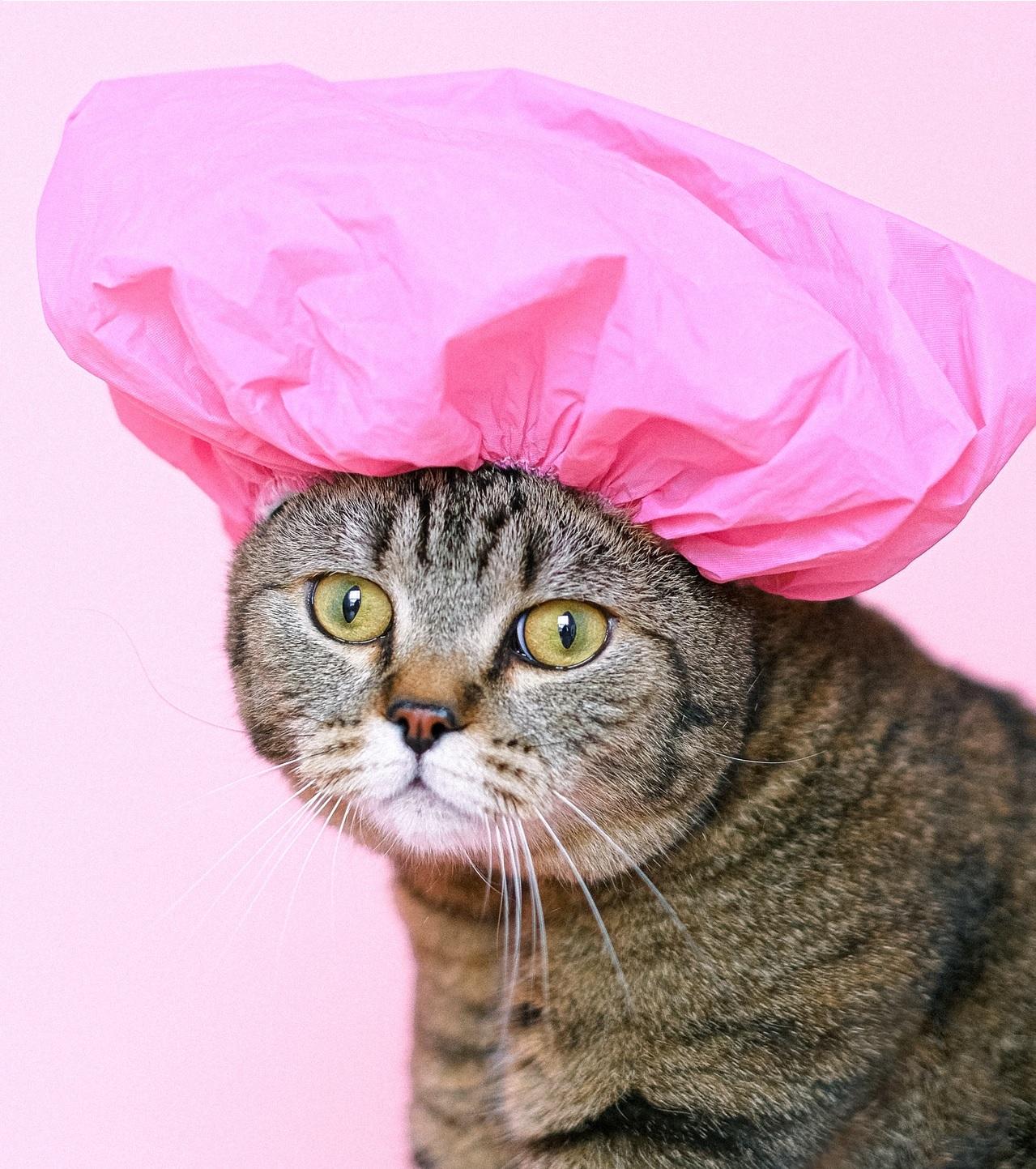 Искусственный интеллект научили оценивать самочувствие котов