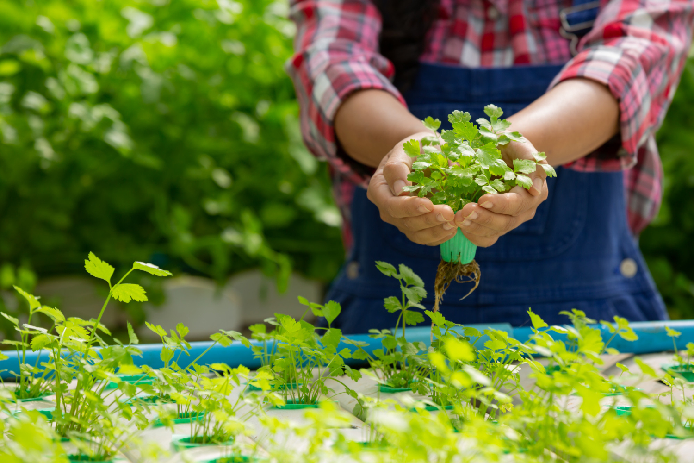 Выращивание растений на искусственных средах