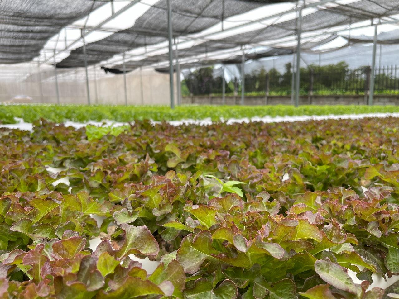 Выращивание растений в искусственных условиях